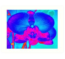 Playing with the Orchid Art Print