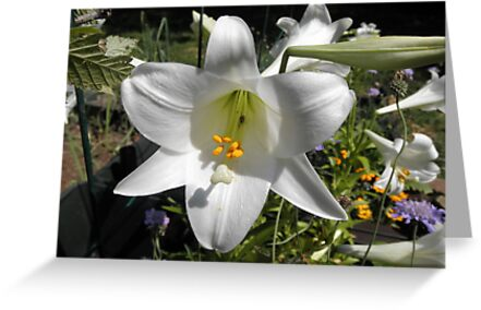 Easter Lilly In Garden by ack1128