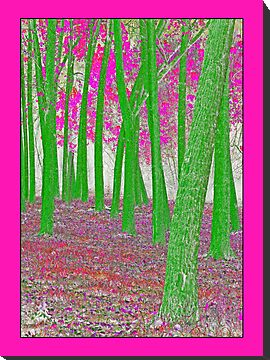 Green and Pink forest by Graeme Bayley