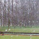 A snowy Day in Cambridge by KUJO-Photo