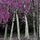 Pink leaved Forest by Graeme Bayley