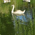 Two Geese and Swan by KUJO-Photo