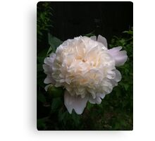First peony this summer Canvas Print