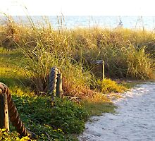 Pathway to the beach by ♥⊱ B. Randi Bailey
