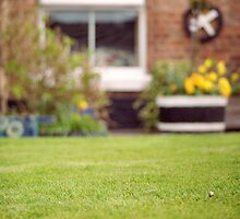 Perfect Lawn with Daisy, Chester by KUJO-Photo