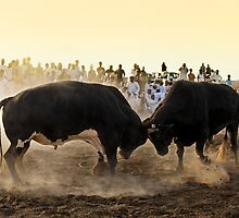 Bullfight by Norbert Probst