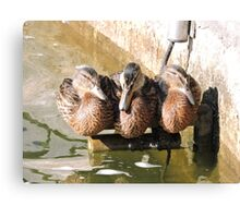 A Perch for Three Canvas Print