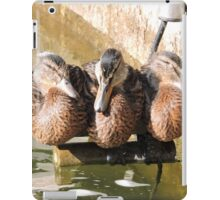 A Perch for Three iPad Case/Skin