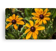 Flowers XV Canvas Print