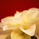 Blooming Flower II by ChristaJNewman