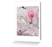 white roses and pink bud- Santa Barbara Greeting Card
