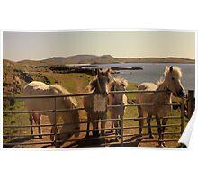 Barra Horses Poster