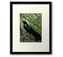 The Early Bird Catches The Worm - A Quien Madruga, Dios Le Ayuda Framed Print