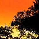 Evening Fire by Nicole I Hamilton
