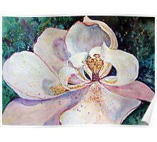 Sweet Magnolia Poster