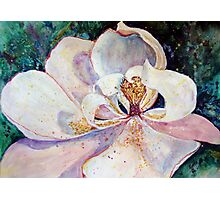 Sweet Magnolia Photographic Print