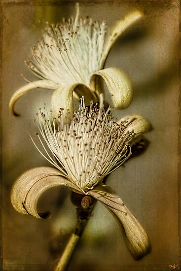 The Botany Specimen by Chris Lord