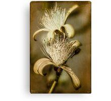 The Botany Specimen Canvas Print