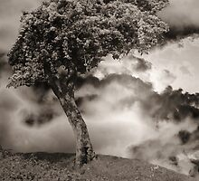 Tree on a Hill by Christine Lake
