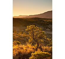 Larapinta Sunset Photographic Print
