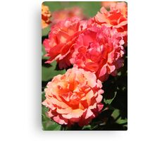 Roses - Apricot Delight Canvas Print