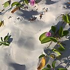 Flowers in the Sand by PointBlankInd