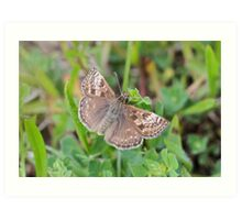 Not So Dingy Skipper Art Print