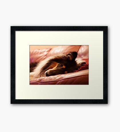 Fergus Framed Print