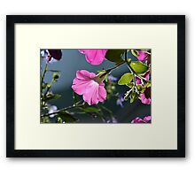 The Light of Things Framed Print