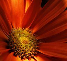 Macro Flower by DavidWayne