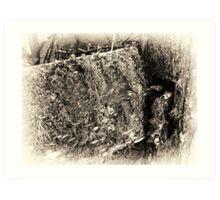 Lichen & Time.. Art Print