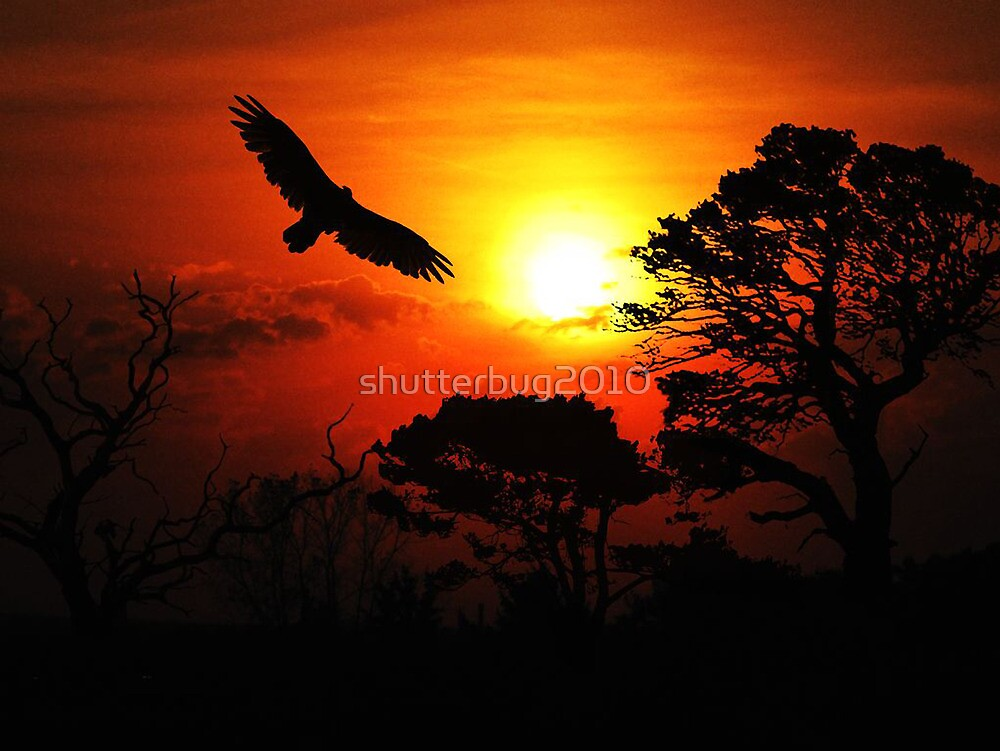 Soaring at Sunset by shutterbug2010