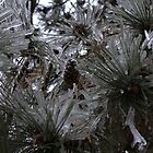 Icy Pine by PointBlankInd