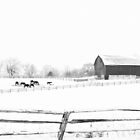 Winter rural scene by Tatianaphoto