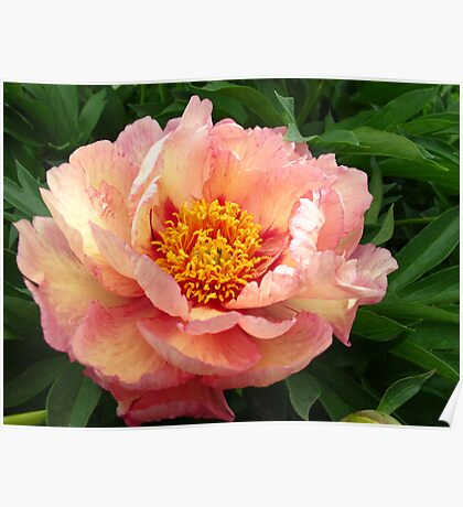 Marbled Peony Poster