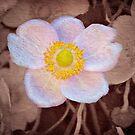 Anemone - textured by PhotosByHealy