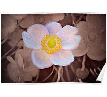 Anemone - textured Poster