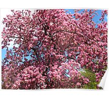 Blossoming Trees Poster