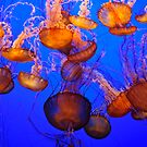 Jellyfish Mess by Diego  Re