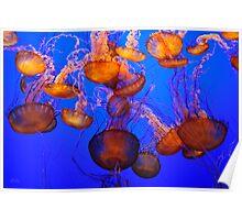 Jellyfish Mess Poster