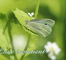 Love is patient by hummingbirds