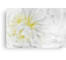 Peony in White Canvas Print