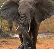 Ya wanna dance? by Explorations Africa Dan MacKenzie