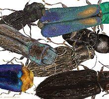 Jewel Beetle Crowd by Glendon Mellow