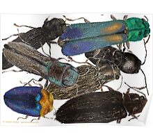 Jewel Beetle Crowd Poster