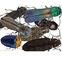 Jewel Beetle Crowd Photographic Print