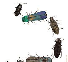 Jewel Beetle Parade by Glendon Mellow