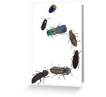 Jewel Beetle Parade Greeting Card