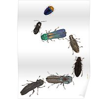 Jewel Beetle Parade Poster