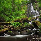 Cedar Falls by Tula Top